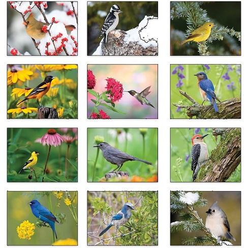 Monthly Scenes of Backyard Birds 2021 Calendar