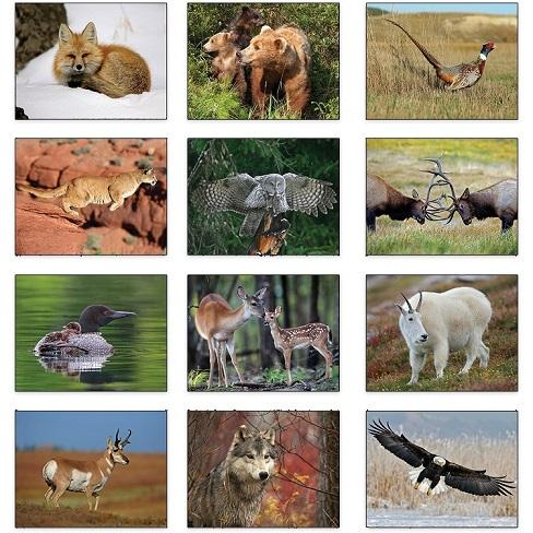 Monthly Scenes of Wildlife 2021 Calendar